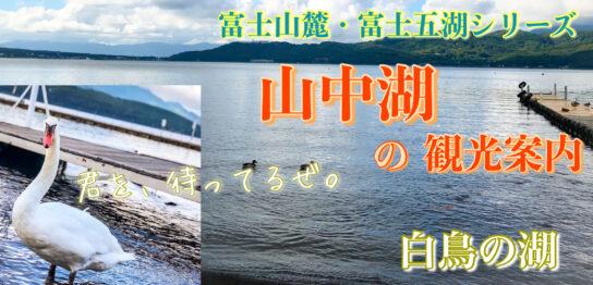 山中湖のサムネ_イケメン白鳥があなたをお出迎え