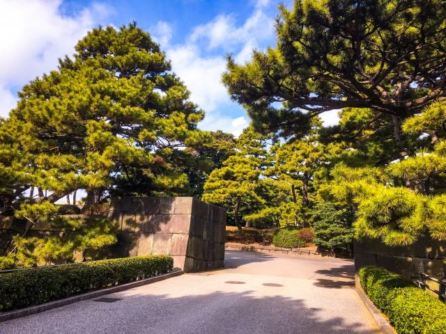 この松(?)の雰囲気がいかにも「日本っ!」って感じで大好きです!