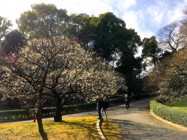 梅林坂。梅が綺麗でしたよ!