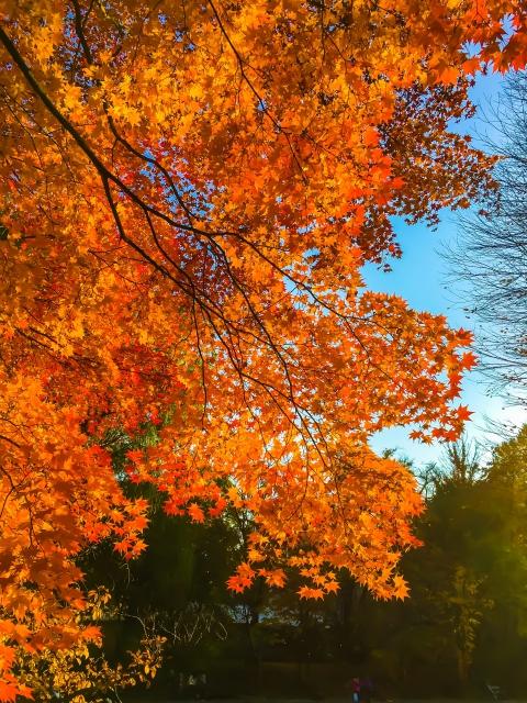 大野池の紅葉。北大構内にまさかのスポットが、、!