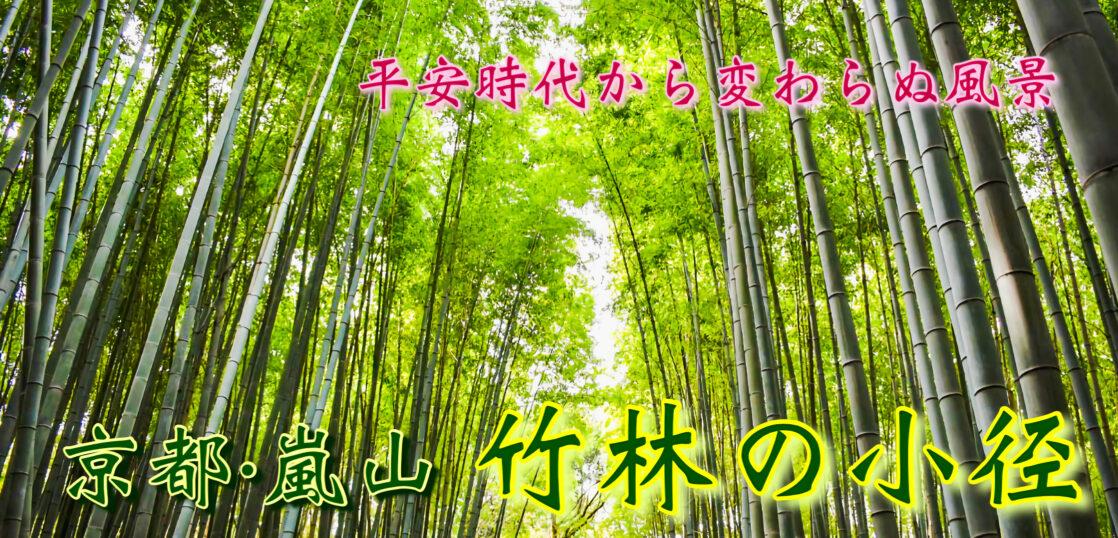 竹林の小径 サムネ