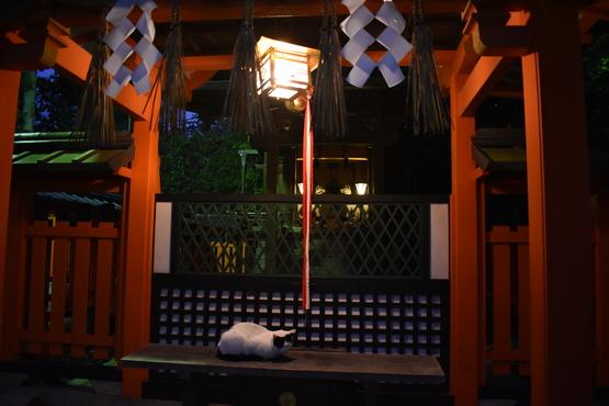 夜の伏見稲荷大社_眠り猫