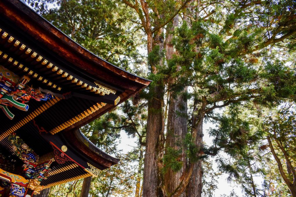 三峯神社_御神木