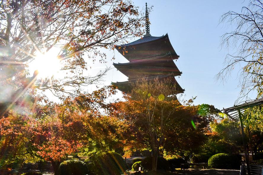東寺_五重塔と朝日と紅葉