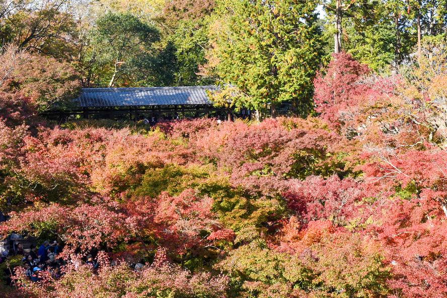 東福寺_通天橋から眺める臥雲橋と紅葉