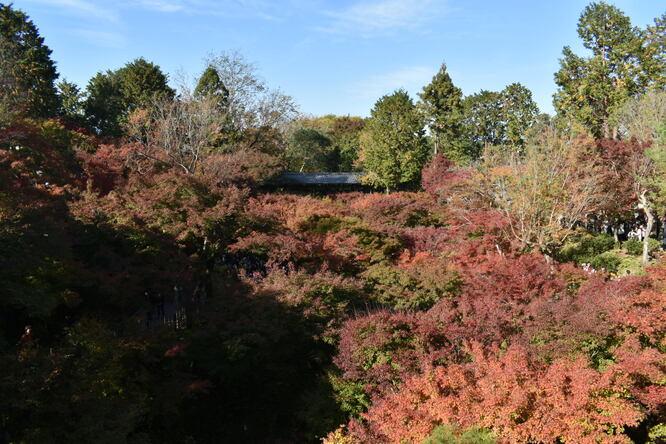 東福寺_通天橋からの紅葉絨毯