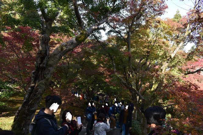 東福寺_紅葉散策