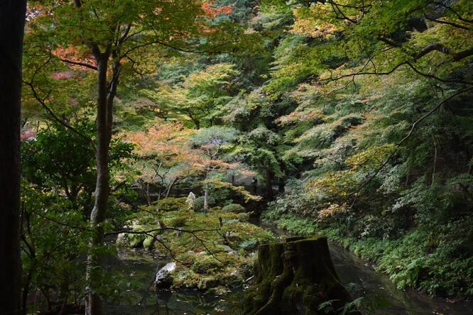 南禅院_幽玄な庭園と紅葉
