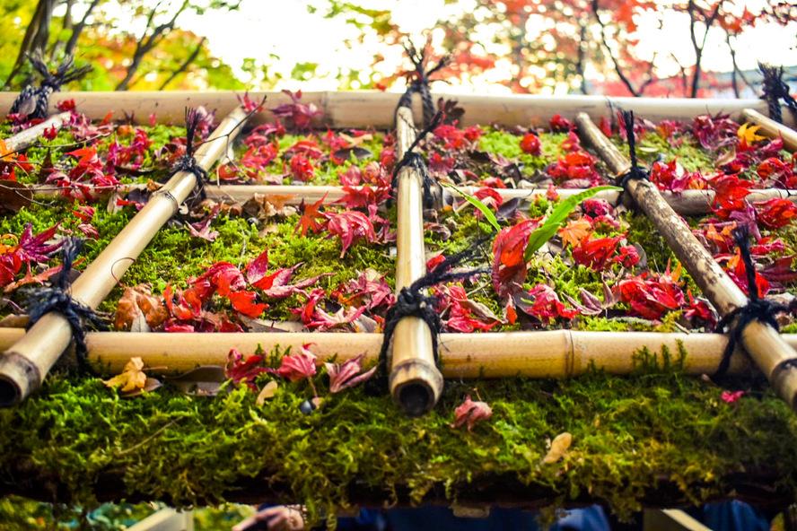 天授庵_散り紅葉と苔の茅葺屋根