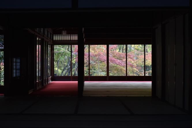 天授庵_書院と紅葉のフォトスポット