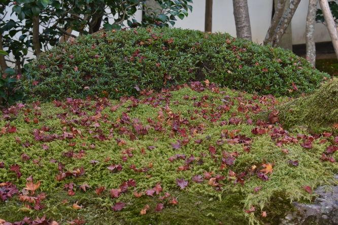 天授庵_散り紅葉と苔山