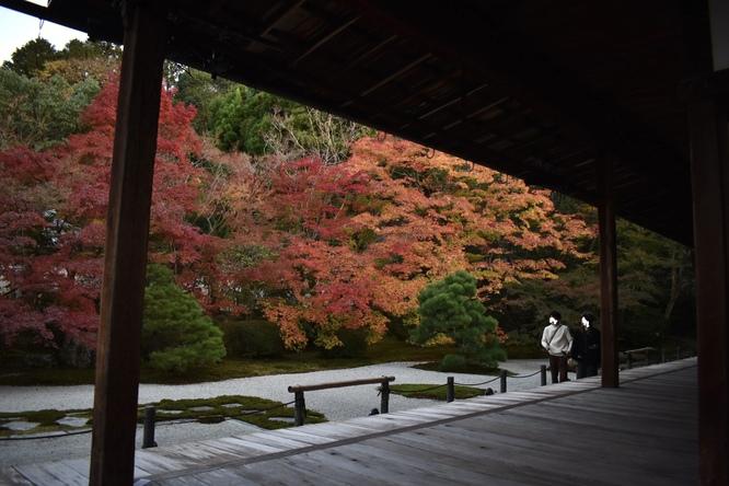 天授庵_紅葉の枯山水庭園