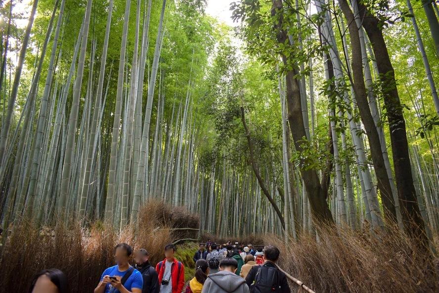京都・嵐山_竹林の小径