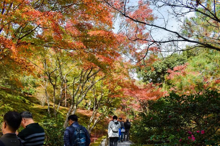 嵐山の天龍寺_紅葉に染まる庭園