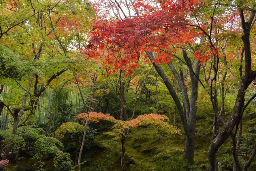 嵐山の常寂光寺_紅葉に染まる庭園