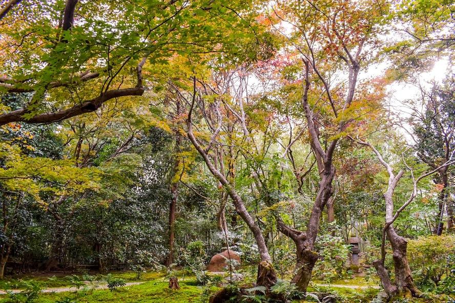 嵐山・厭離庵_紅葉と庭園