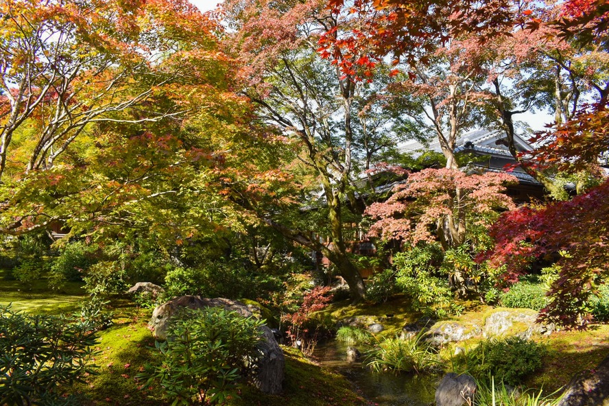 嵐山・宝厳院_紅葉に染まる庭園