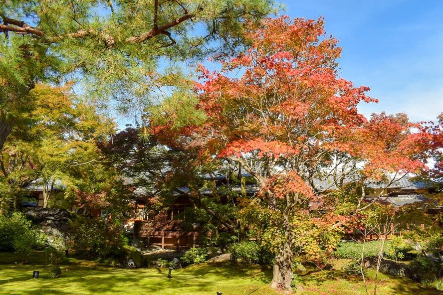 嵐山・宝厳院_紅葉に染まる庭園と青空