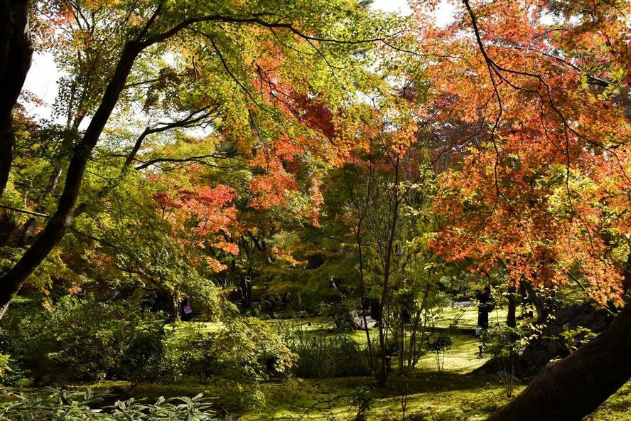 嵐山・宝厳院_紅葉に染まる獅子吼の庭