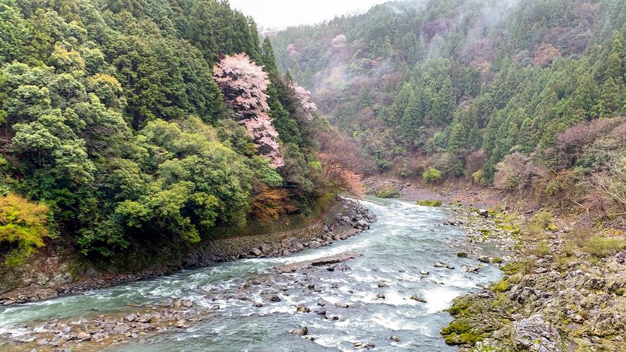 嵯峨野トロッコ列車_春の風景
