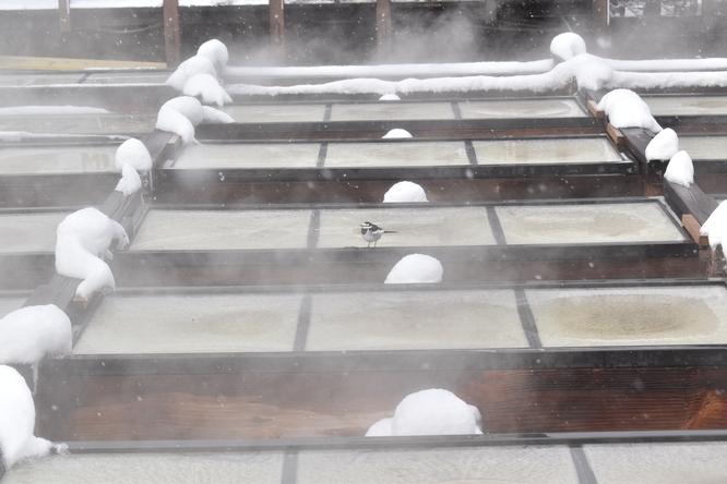 雪の草津温泉_湯畑で温まる小鳥
