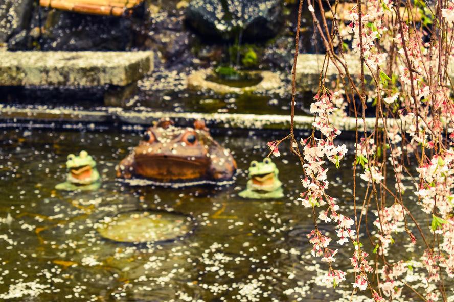 嵐山・天龍寺の百花苑_蛙と春の桜