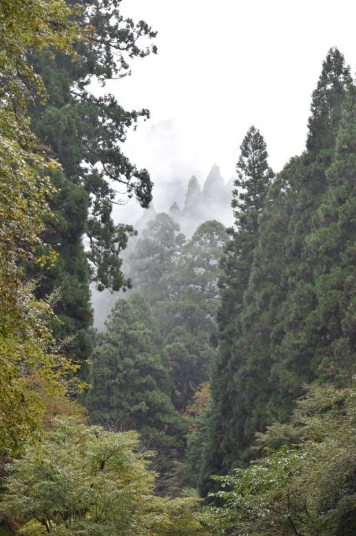 貴船神社参道_三社詣と京都の自然