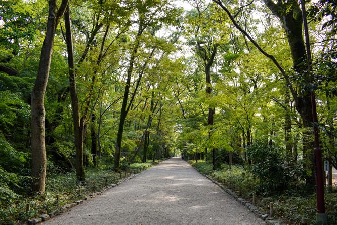 下鴨神社・糺の森と木漏れ日