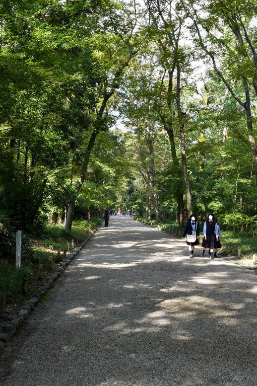 下鴨神社_糺の森