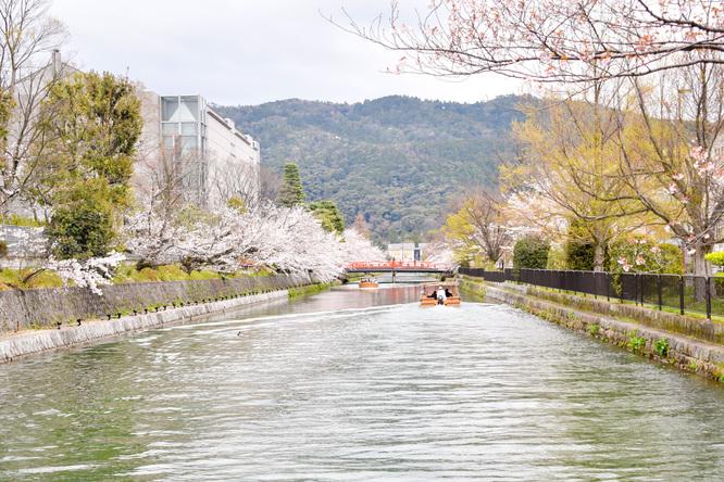 岡崎疏水と鴨川_春の桜
