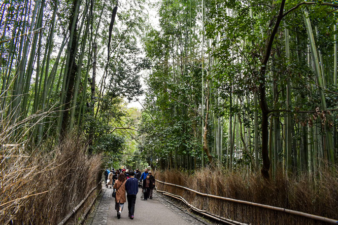 京都・嵐山_竹林の小径・冬