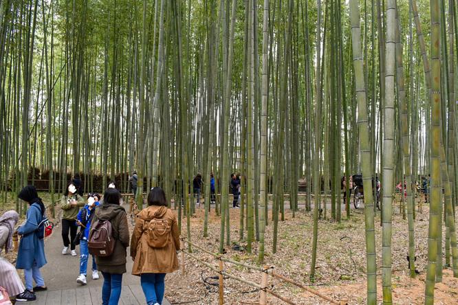 京都・嵐山_竹林の小径・秋