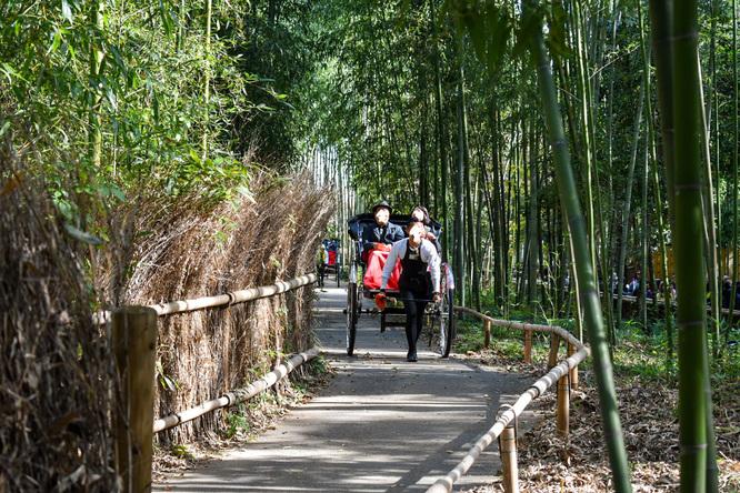 京都・嵐山_竹林の小径と人力車