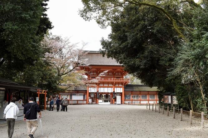 春の下鴨神社・糺の森と楼門