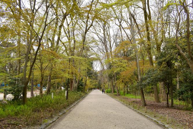 春の下鴨神社・糺の森