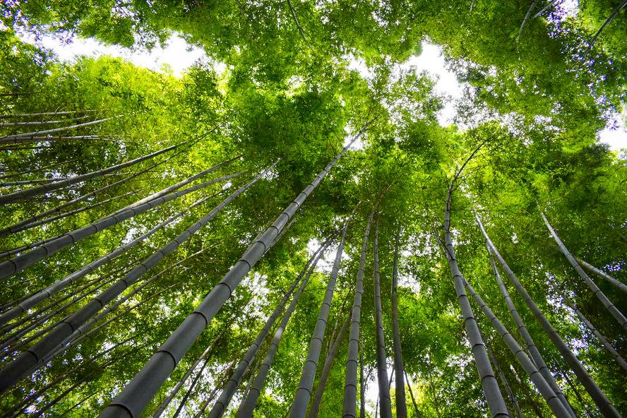 竹林の小径について_京都・嵐山の自然