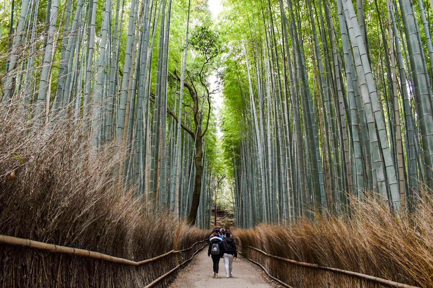 竹林の小径の観光情報_京都・嵐山の自然