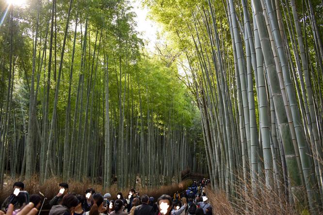 竹林の小径・秋