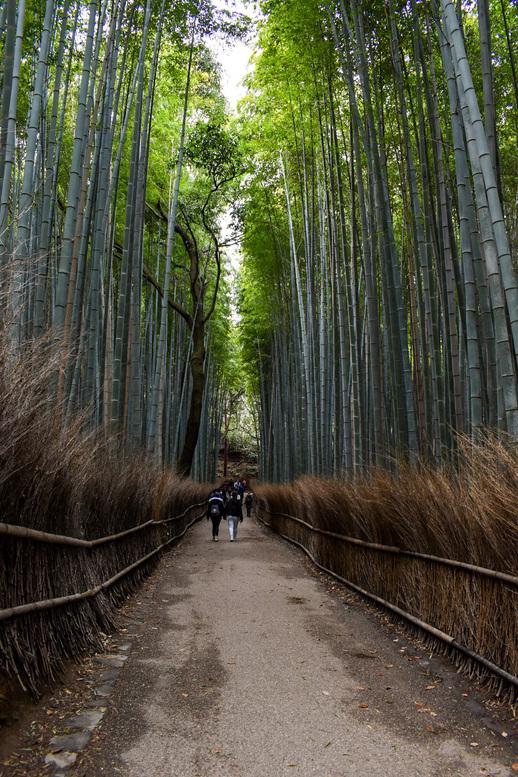 竹林の小径・冬
