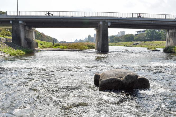 鴨川サイクリング_古都・京都の自然