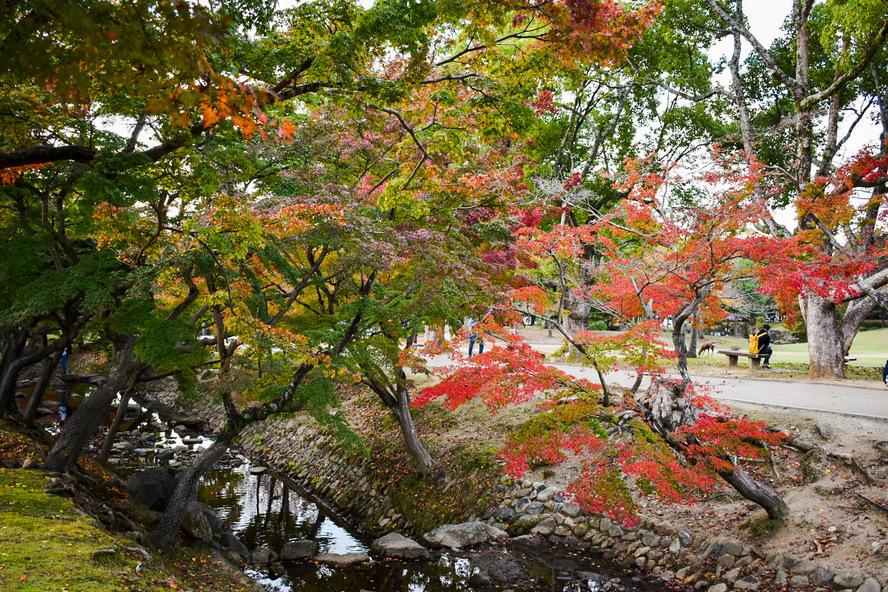 奈良公園の見どころまとめ_秋の紅葉