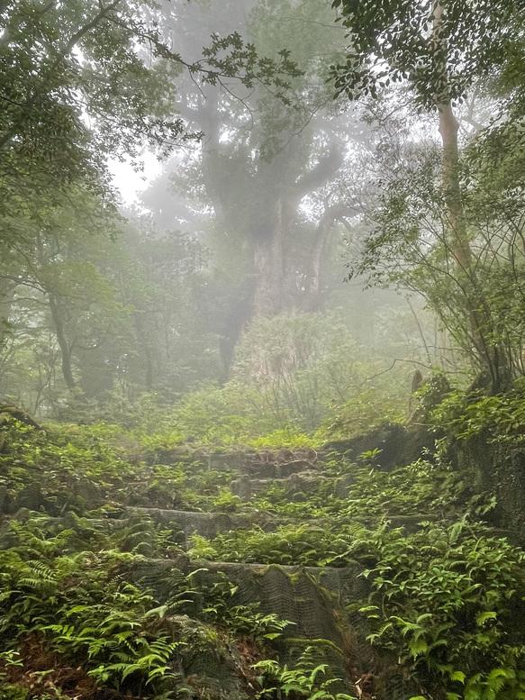 屋久島観光_縄文杉と霧の自然