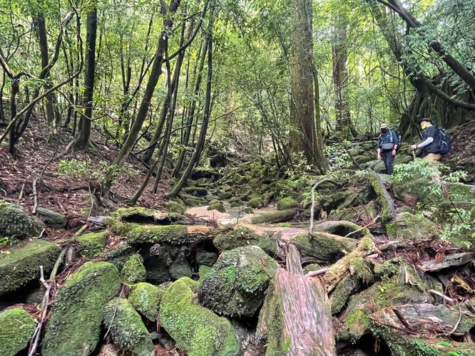 屋久島観光_縄文杉トレッキング_ 山道と自然