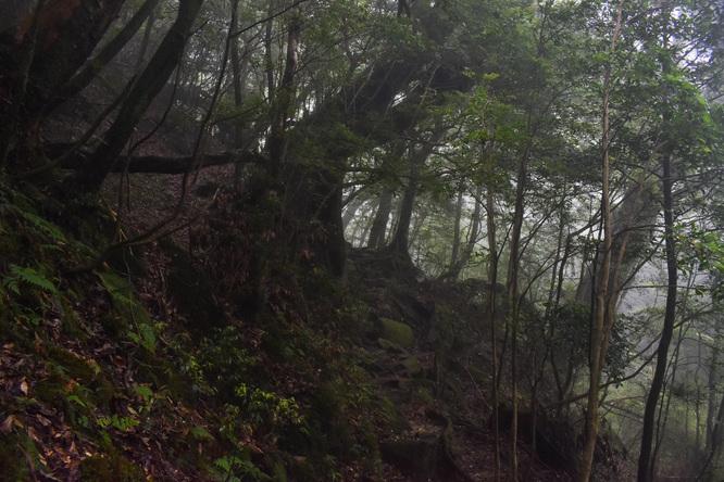 屋久島白谷雲水峡_霧がかる苔むす森_奉行杉コース_もののけ姫の世界