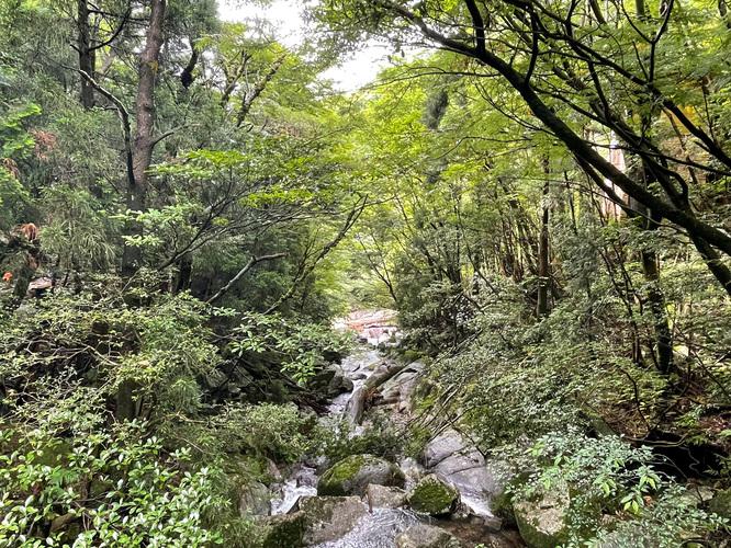 屋久島観光_縄文杉トレッキング_トロッコ道の自然
