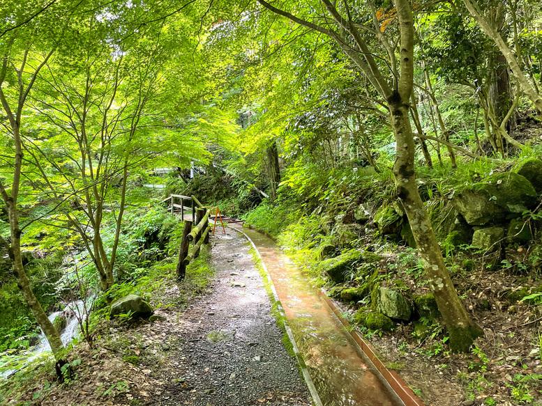 付知峡_岐阜の自然観光_水路と木漏れ日
