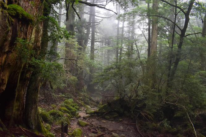 屋久島白谷雲水峡_霧がかる苔むす森_もののけ姫の世界