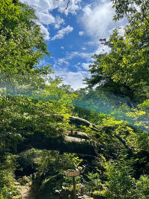 白谷雲水峡_太鼓岩への山道_屋久島の大自然_快晴