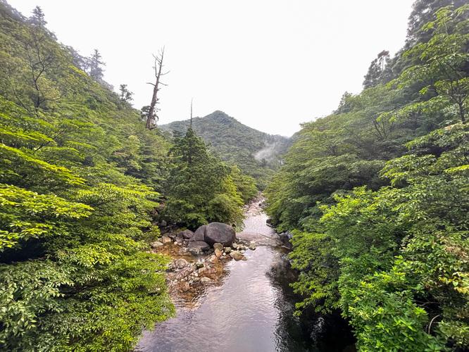 屋久島観光_縄文杉トレッキング_トロッコ道からの風景