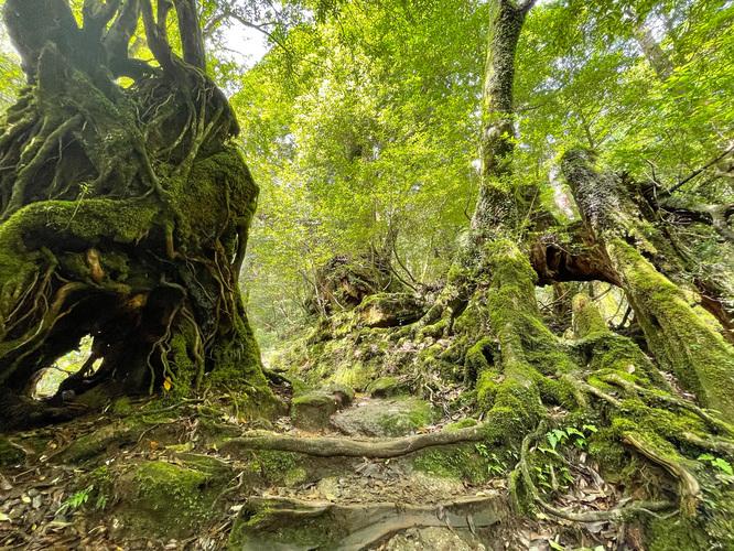 白谷雲水峡_太鼓岩への山道_屋久島の大自然